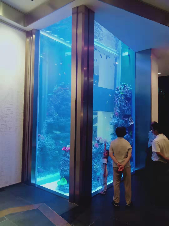 生态水族箱