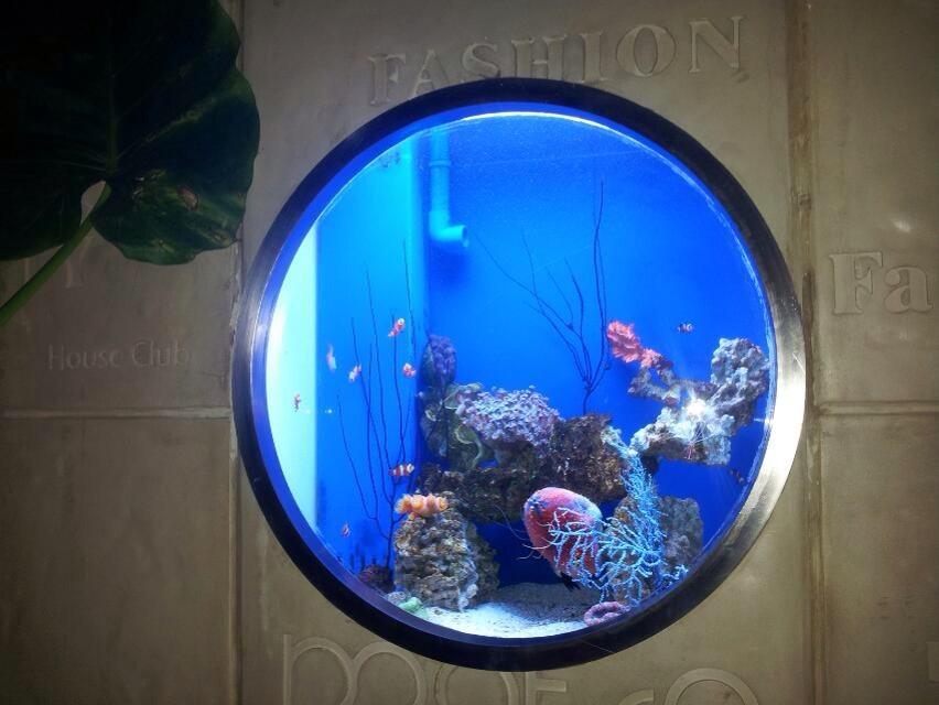圆形窗口式观赏鱼缸