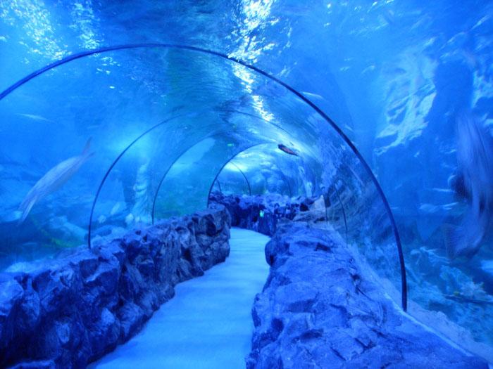 海洋馆隧道建设