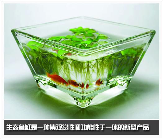 玻璃观赏杏彩平台