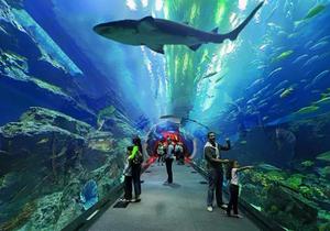 海洋馆观光隧道