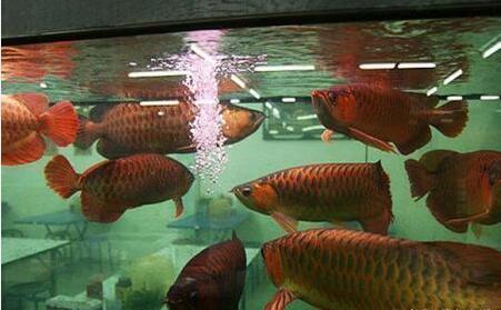 龙鱼观赏杏彩平台